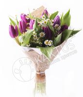 Букет фиолетовых тюльпанов с ромашками