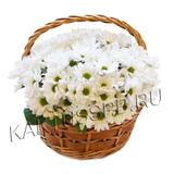 Корзина с хризантемой в магазине kaktus.spb.ru