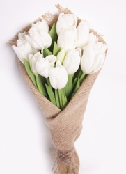 Белые тюльпаны в мешковине