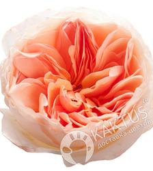 Пионовидная роза Juliet