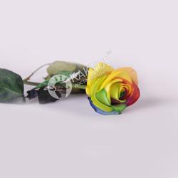 Радужная роза фото