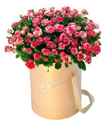 Кустовые розовые розы.
