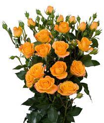 Жёлтые кустовые розы в букете.