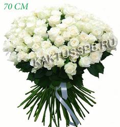 101 белая роза Эвадор (70 см)