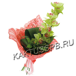 Букет из зеленой орхидеи цимбидиум