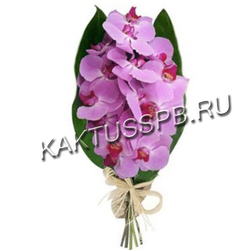 Букет орхидеи фаленопсис