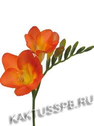Фрезии оранжевые
