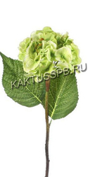 Гортензия зеленая