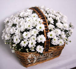 Корзина с хризантемой Баккарди