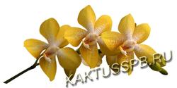 Орхидея Дендробиум желтая