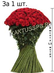 Роза XXXL