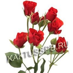 Кустовая красная роза в Спб.