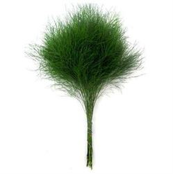 Декоративная зелень аспарагус