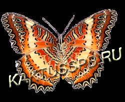 Бабочка златоглазка (Cethosia biblis)