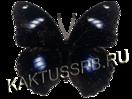 Лунная бабочка (Hypolimnas bolina)