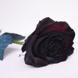 Черная роза (Россия). Grand Prix фото 2