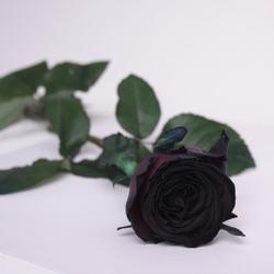 Черная роза поштучно