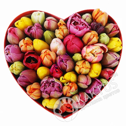 Сердце из тюльпанов.