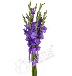 Букет фиолетовых гладиолусов.