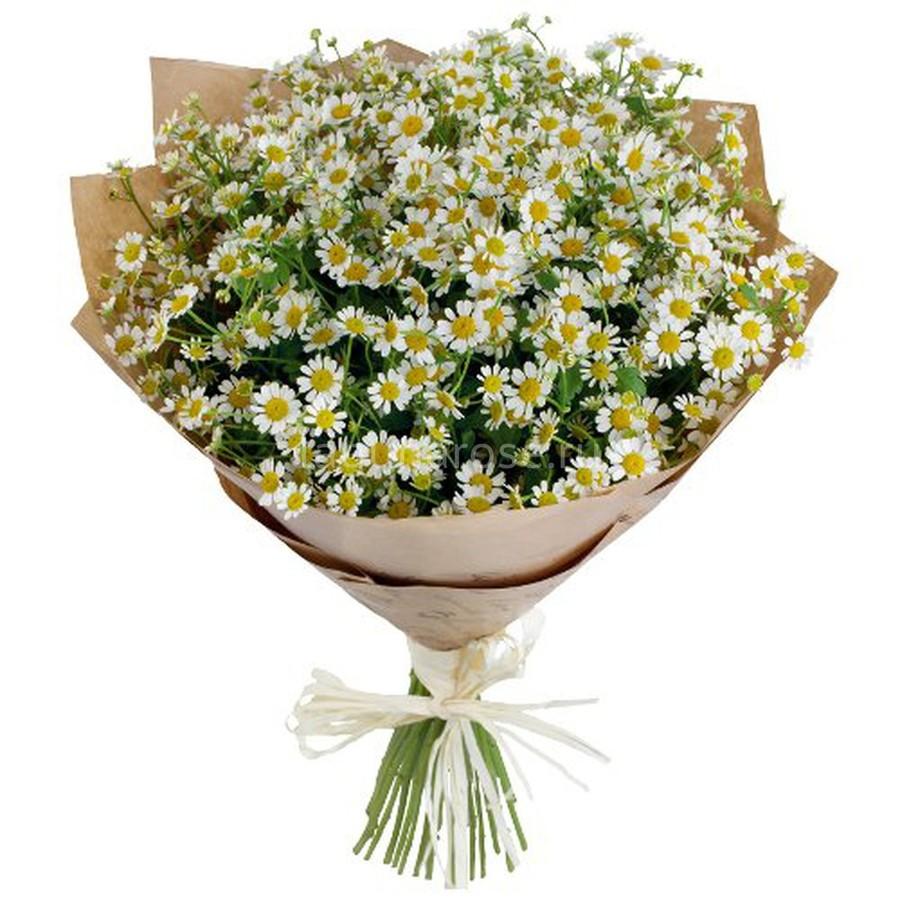 Купить в санкт петербурге цветов ромашки санкт-петербург, настольные роз фото