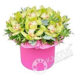 Коробка с зелеными орхидеями.