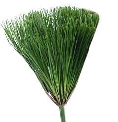 Декоративная зелень папирус