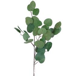Декоративная зелень эвкалипт популус