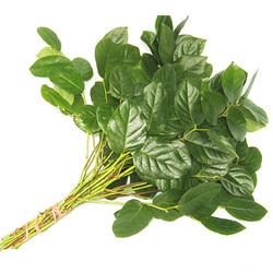 Декоративная зелень салал