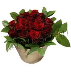 Ведро с розами
